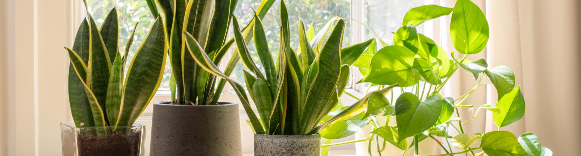 Plants.com Hero